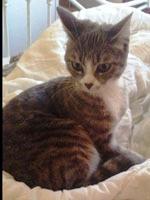 vermiste katten nederland